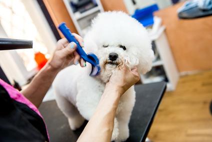 Jak często kąpać psa? Czykąpielą mu zaszkodzę?