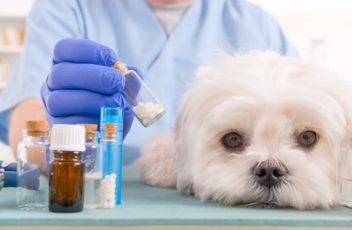 psa leczy lekarz weterynarii