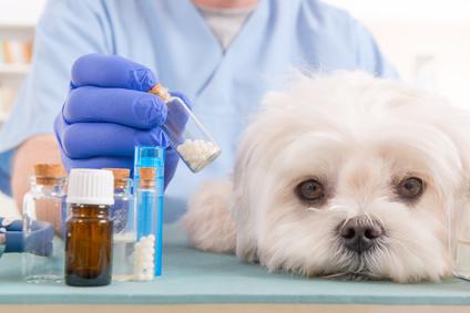 Psa leczymy ulekarza weterynarii!