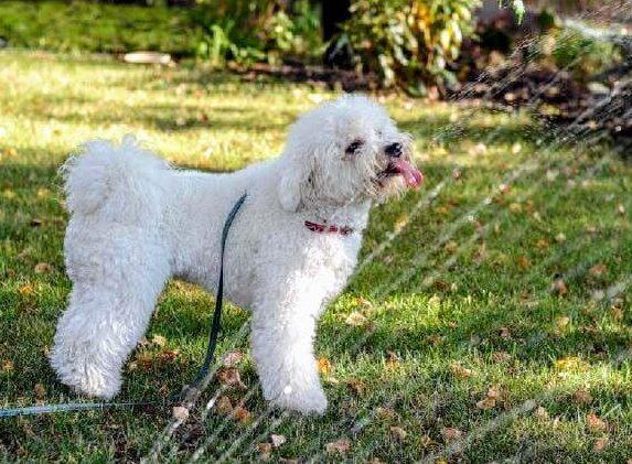 Piękny ogród czyszczęśliwy pies?